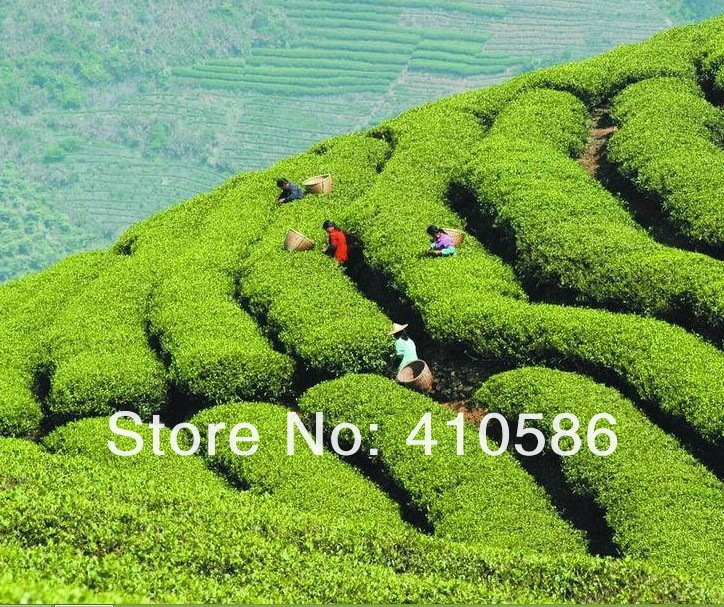 Органический зеленый чай