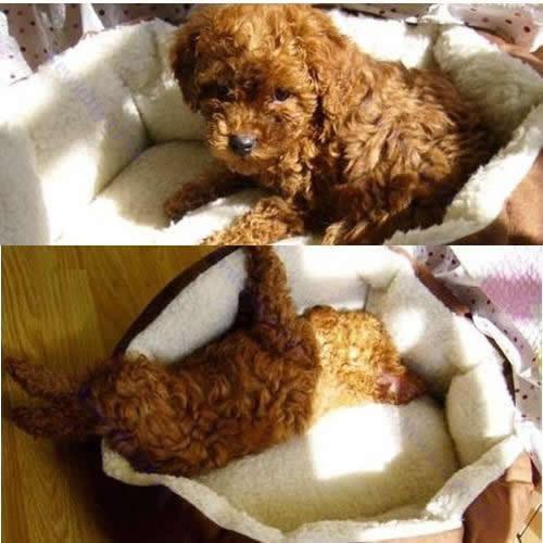 Плюшевая постель для животных