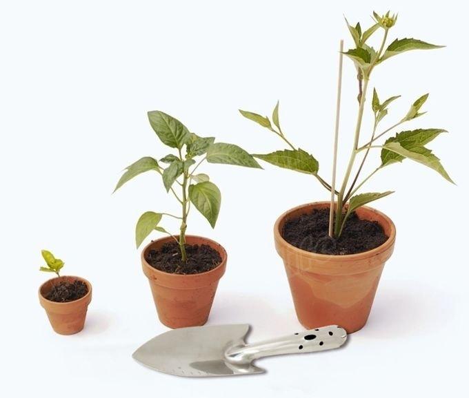 Садовая лопатка для цветов и рассады