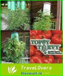 Плантатор для помидоров