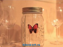 Летающая бабочка в банке